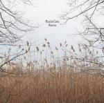 paula-cole-raven